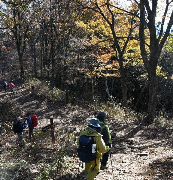 黄葉の中、下山する登山者