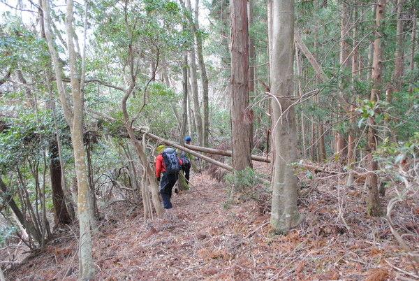 倒木の登山道を進む。この程度は序の口だった