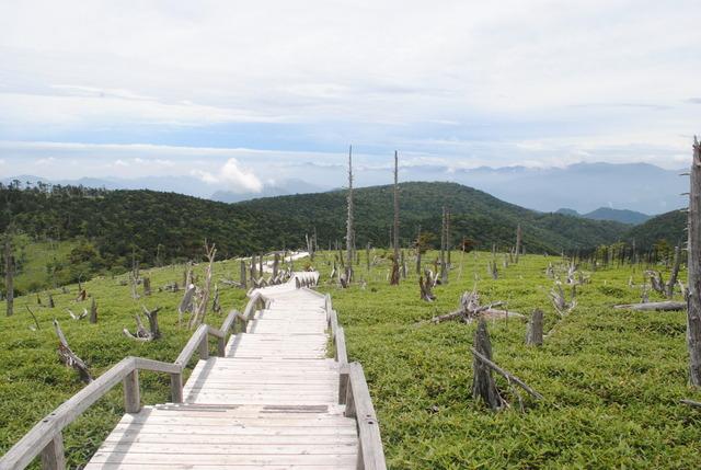 正木峠からの風景。トウヒの立ち枯れが目立つ