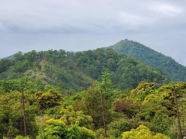 丹沢山への道を振り返ると、塔ノ岳が見えた。山頂には山小屋が建つ