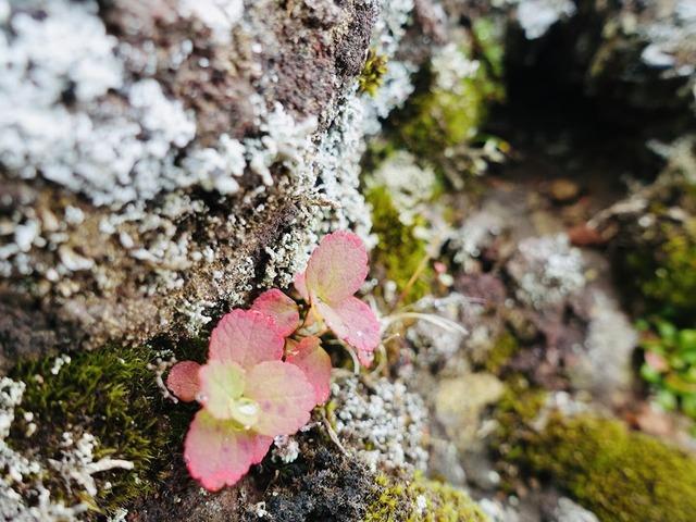 写真14_小さな秋が、あちこちに