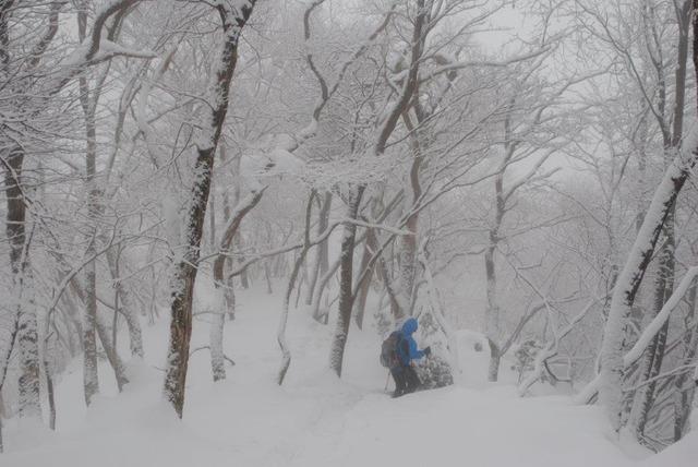 凍てついた雪の森を下山する
