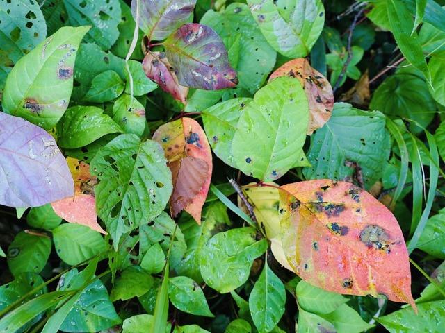 写真09_小さな秋が、あちこちに