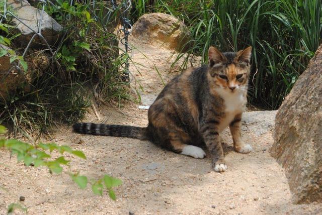 風吹岩の野良ネコ