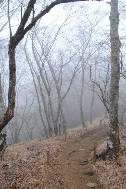 山頂に続く登山道。ブナなどが並んでいる