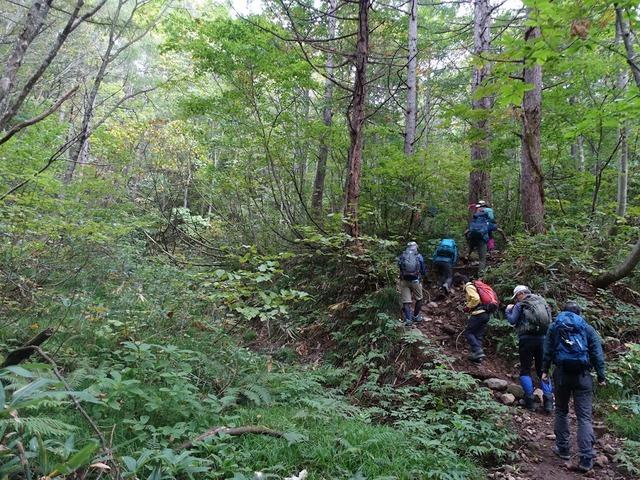 写真12_焼石岳はブナの森から登り始め
