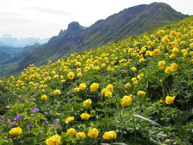 ポルドイ峠への斜面は一面のお花畑