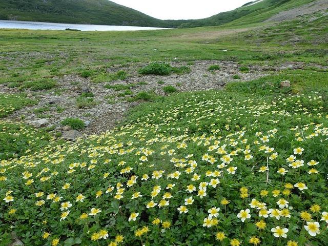 写真03:小さな高山植物の可憐さ。