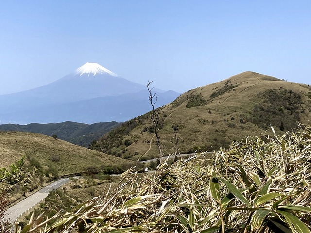 ⑯古希山手前から達磨山と富士山