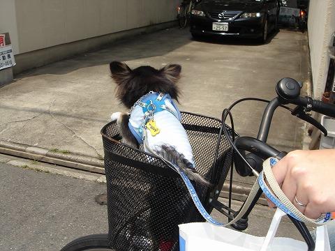 舞斗 自転車乗って ルンルン〜♪