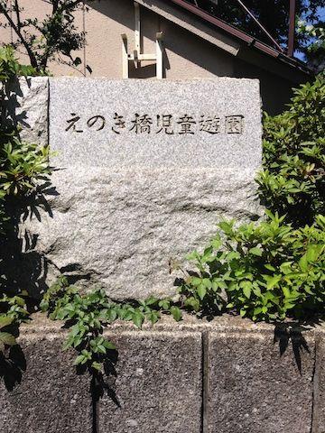 野川20150628_4