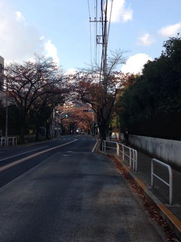 東京農大付近20141123_1
