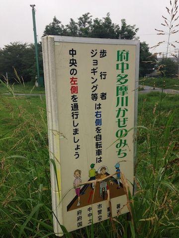 多摩川20150830_6