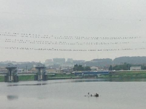 多摩川20150830_1