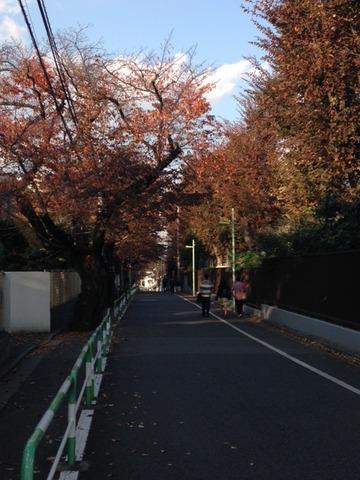 東京農大付近20141123_2