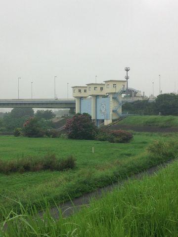多摩川20150830_4