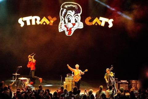 Stray-Cats-_-Suzie-Kaplan-1-732x488