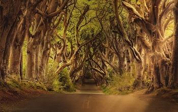 見通せない林道