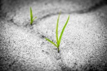 アスファルトから生える草