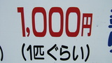 02ab3cc8.JPG