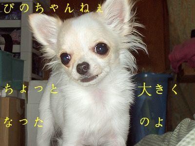 ぴのちゃん