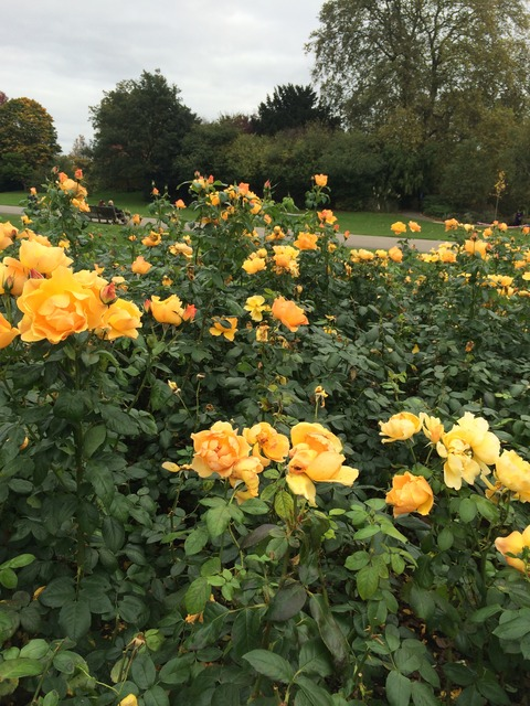 Regents Park_garden2