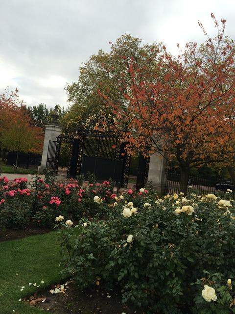 Regents Park_garden1