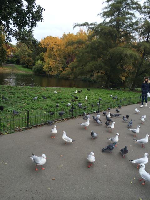 Regents Park_garden6