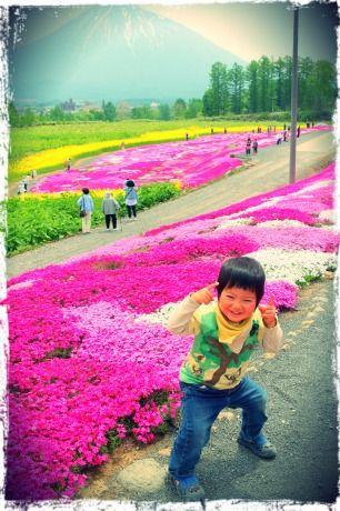 三島さんちの芝桜