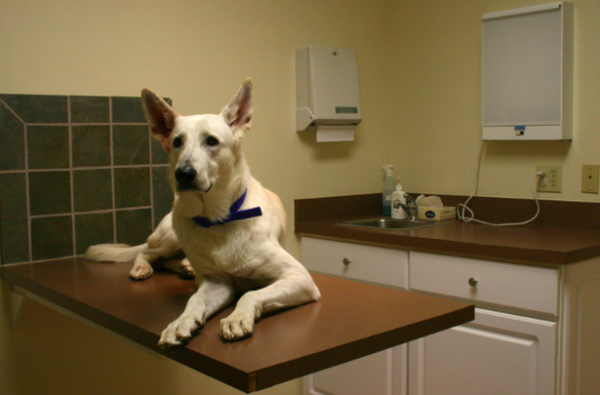 dog-at-vet