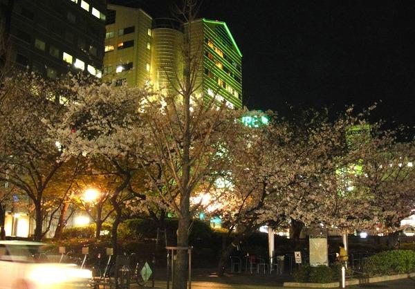 福岡 桜 2014年3月27日