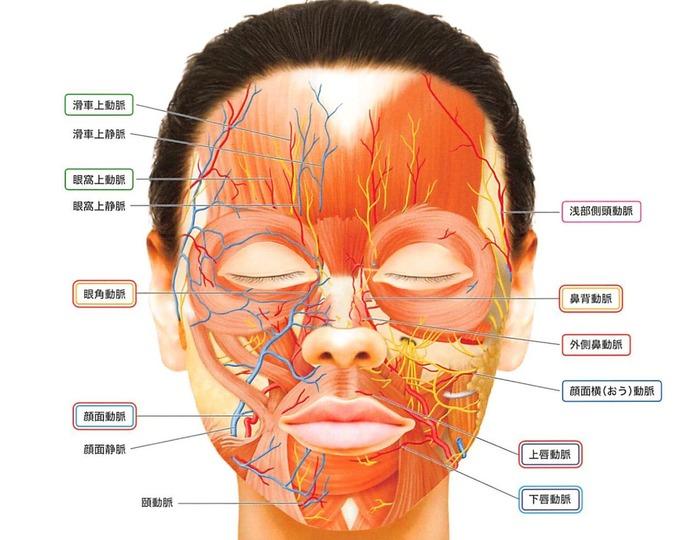 顔面血管走行