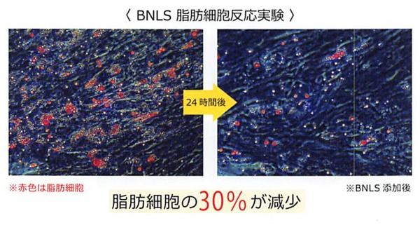 BNLS注射 組織像