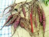 根菜類は収穫するまで判らない・・・ほんとコワイですね。