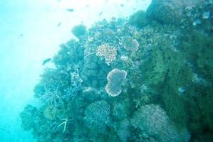snorkeling04