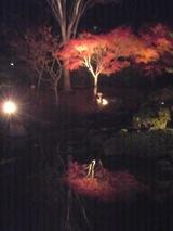 紅葉(夜)