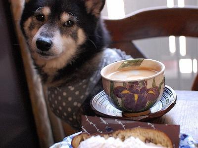 コーヒーとマコ