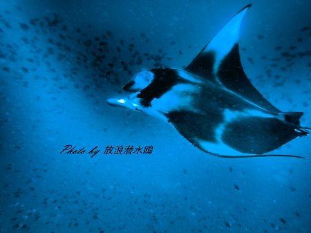 P. 放浪 (3)