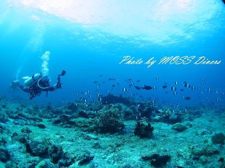 N. MOSS (2)