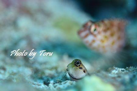 10 Toru
