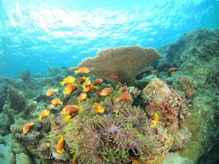 furusawa anemone
