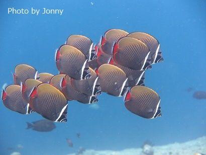Johnny Banana Reef
