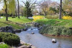 中島公園の鴨々川