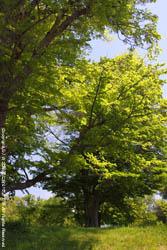 2010年6月7日(月)真駒内公園の風景