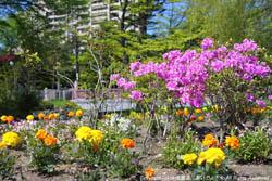 中島公園の花々
