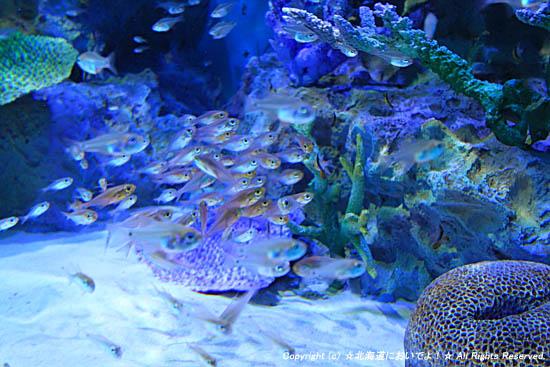 淡水魚たち
