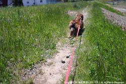 2010年5月30日(日)インディーと散歩