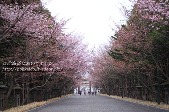北海道東北お花見2017~桜の名所・見ごろ・ライトアップ情報~