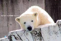 2009/11/22 円山動物園