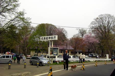 2008/4/26 北海道神宮の桜